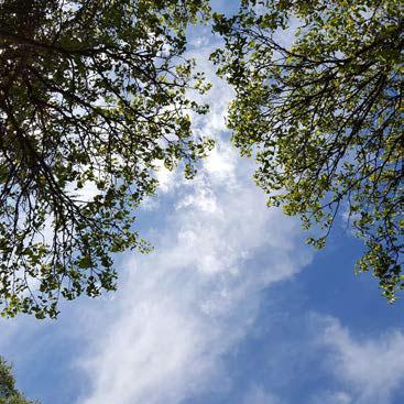 Debroussaillement espace entre les arbres