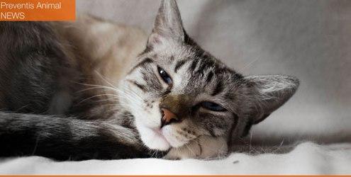 santé animal : blocage urinaire chez le chien et le chat