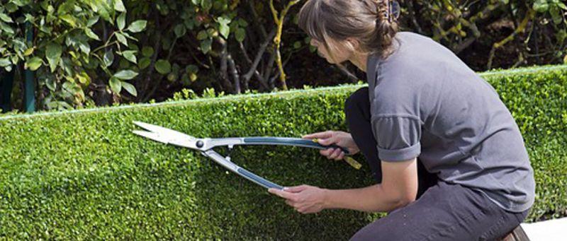 consigli utili per il tuo giardino