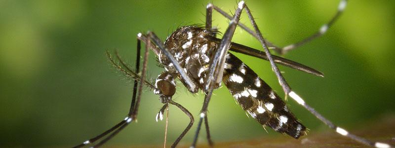 Perché le zanzare pungono alcuni e altri no?