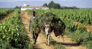 vini marocchini