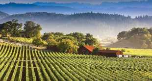 migliori vini della california