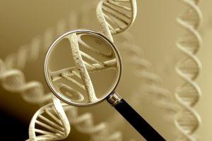 Genealogical DNA