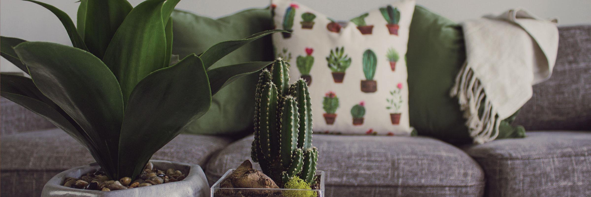 cactus-slider