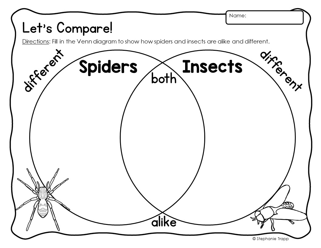 Spider Unit For Kindergarten And First Grade