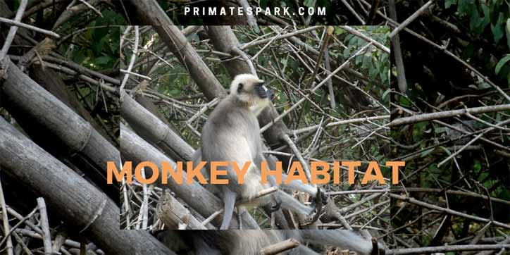 monkey habitat