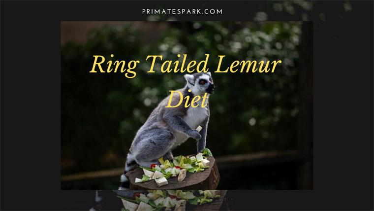 ring tailed lemur diet