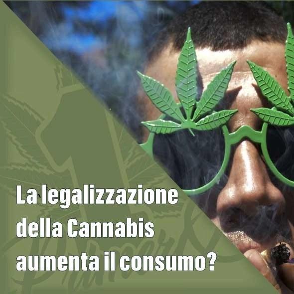 La legalizzazione della Cannabis aumenta il consumo?