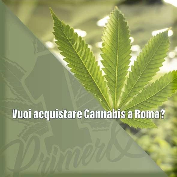Vuoi acquistare Cannabis light a Roma?