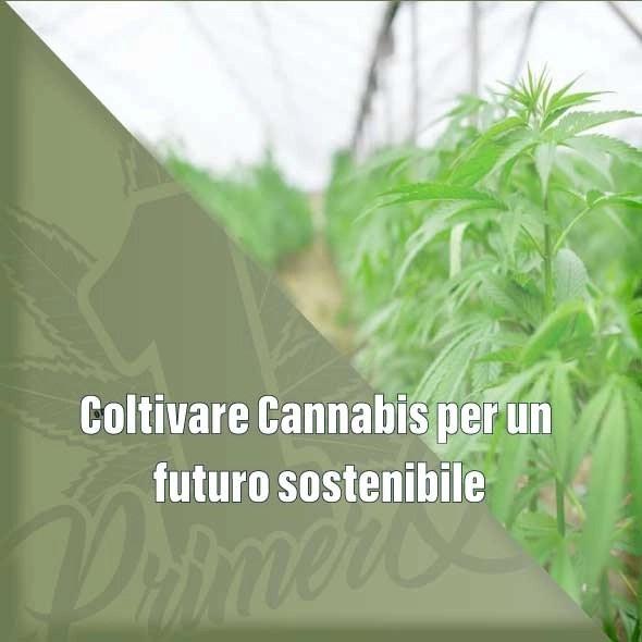 Coltivare Cannabis per un futuro sostenibile