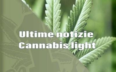 Ultime notizie Cannabis light