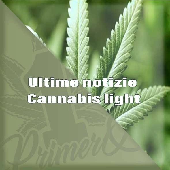 ultime-notizie-cannabis-light