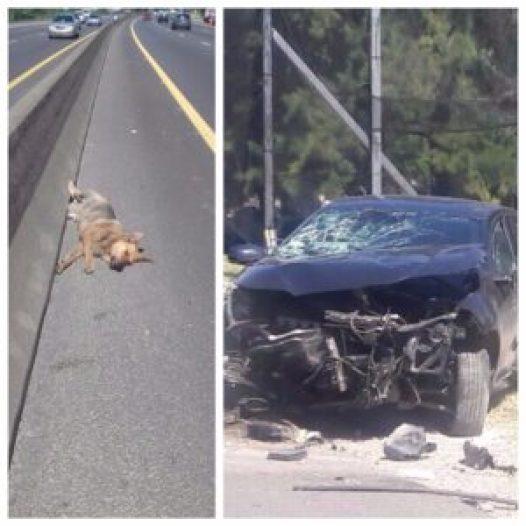 El perro murió en el acto; la camioneta del concejal Carrizo quedó destrozada.