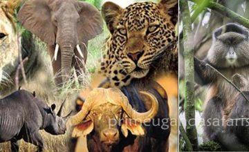 15 Days Uganda Rwanda Combined Group Safari