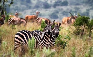 2 Days Wildlife Safari in Rwanda Akagera National Park