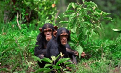 3 Days Chimpanzee Safari in Rwanda to Nyungwe Forest National Park