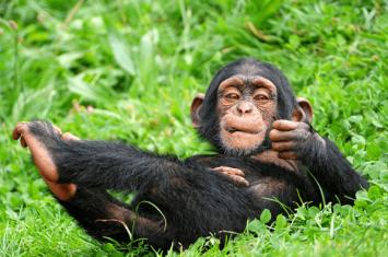 6 days Uganda gorilla trekking safari Bwindi, Queen Elizabeth wildlife tour & Chimpanzee trekking tour Kibale