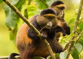 9 days wildlife & gorilla trekking safari in Uganda