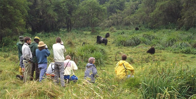 Keeping a distance on a Congo gorilla safari