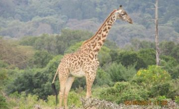 3 Days Wildlife Safari in Kenya to Maasai Mara