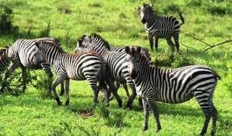 Lake-Mburo-National-Park -uganda