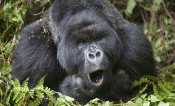 Rwanda Uganda Gorilla Tracking Tour 7 days