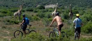 biking safari