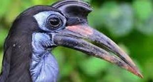 birding safaris-image