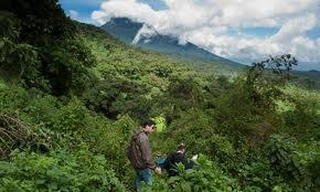Volcanoes National Park-Rwanda