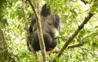 gorilla trekking in Mgahinga np