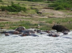 kazinga_channel uganda safaris