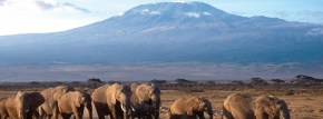 Long Tanzania Safari Tours