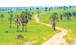 lake mburo-uganda