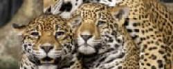 Uganda safaris 9 days
