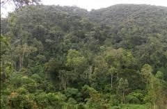 maramagambo forest