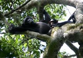 primates  kibale image