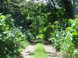 forest camp Entebbe