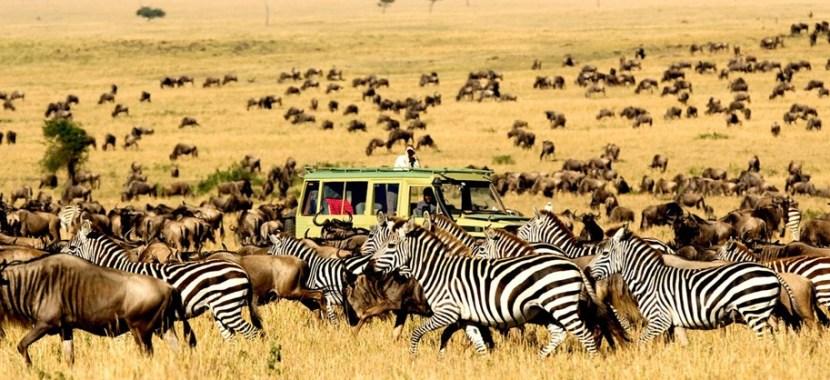serengeti_national-park