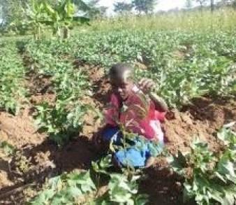 tree planting in Uganda