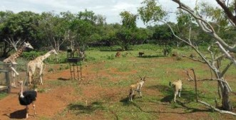 uganda wildlife centre