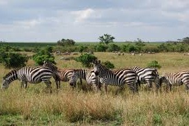 East African wildlife safaris