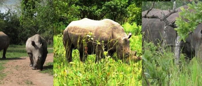 ziwa-rhino-sanctuary-in-uganda