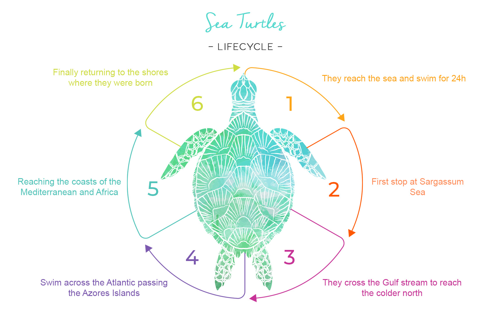 Discovering The Sea Turtles In Riviera Maya With Princess
