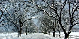 A winter road bordered by snow-covered trees