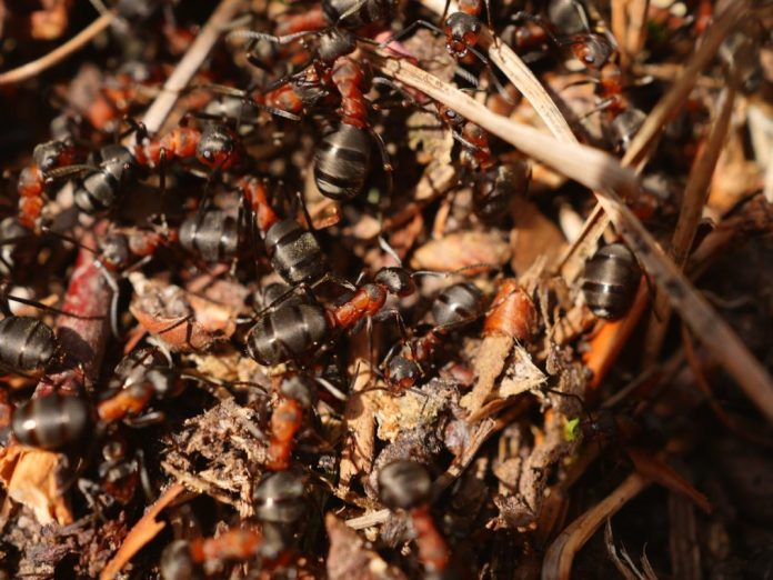 an image of an anthill
