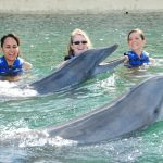 Three women in life jackets swimming with two dolphins