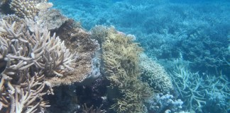 underwater photograph of reef
