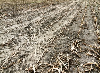 photograph of dead field of crops