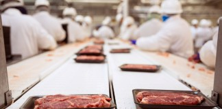 photograph of meat-packing workers crowded around conveyor belt