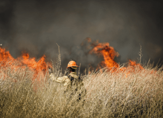 photograph of lone firefighter before a wildfire